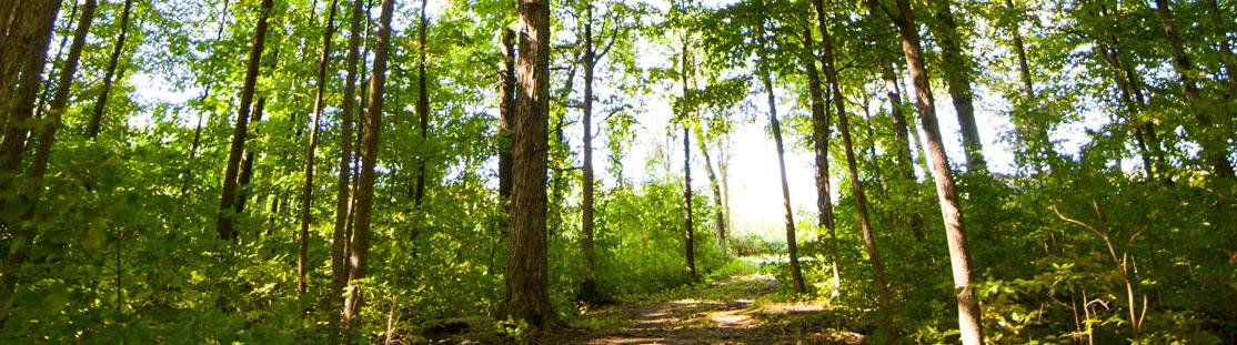 Image de sentier en forêt