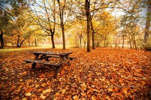 pique-nique-d-automne-dans-le-bois